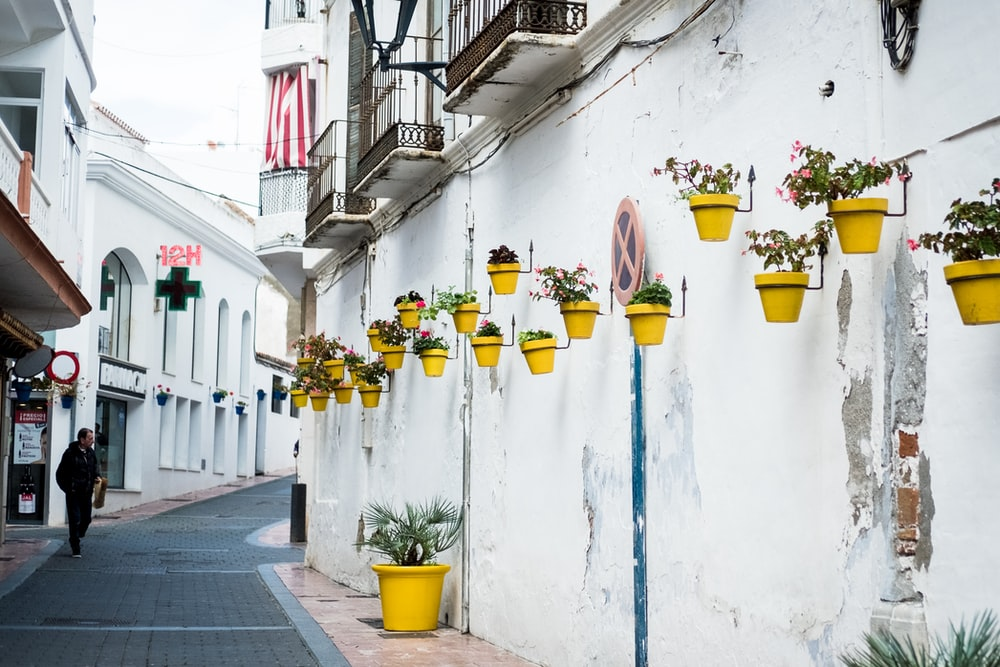 yellow and green flower pots on white wall