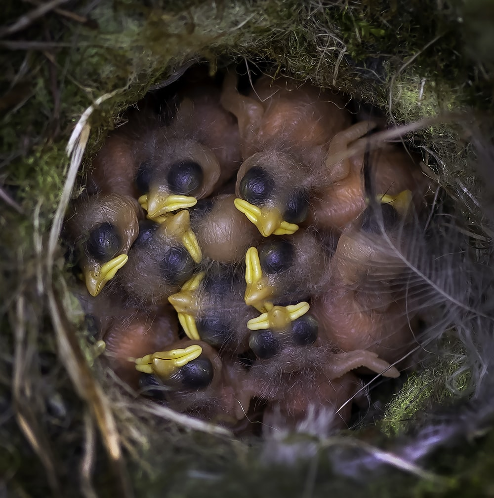 brown and yellow bird on nest
