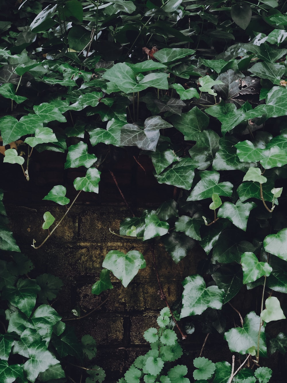 green leaves on brown brick wall
