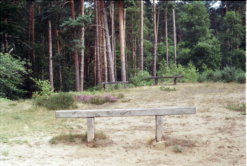 brown wooden picnic table surrounded by trees during daytime