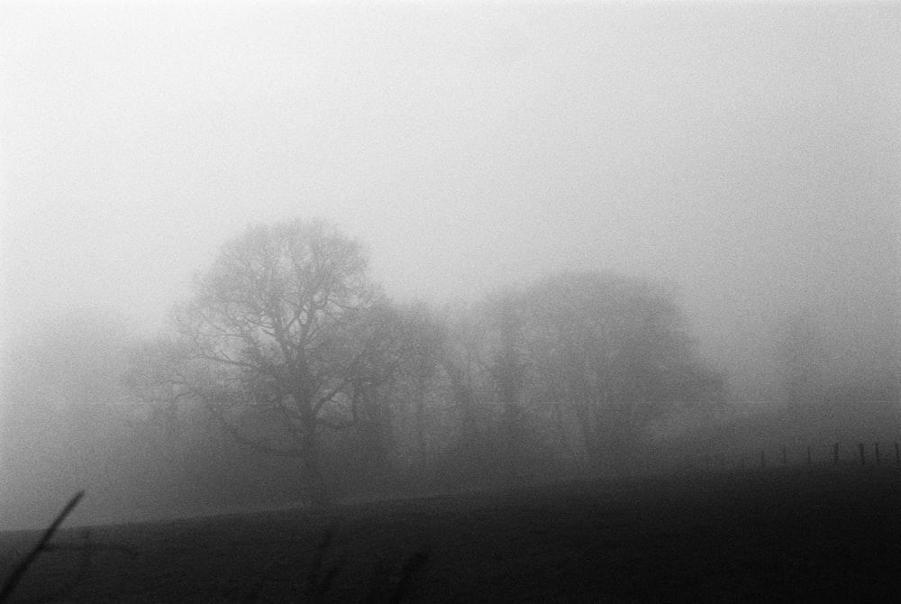 bare tree on foggy weather