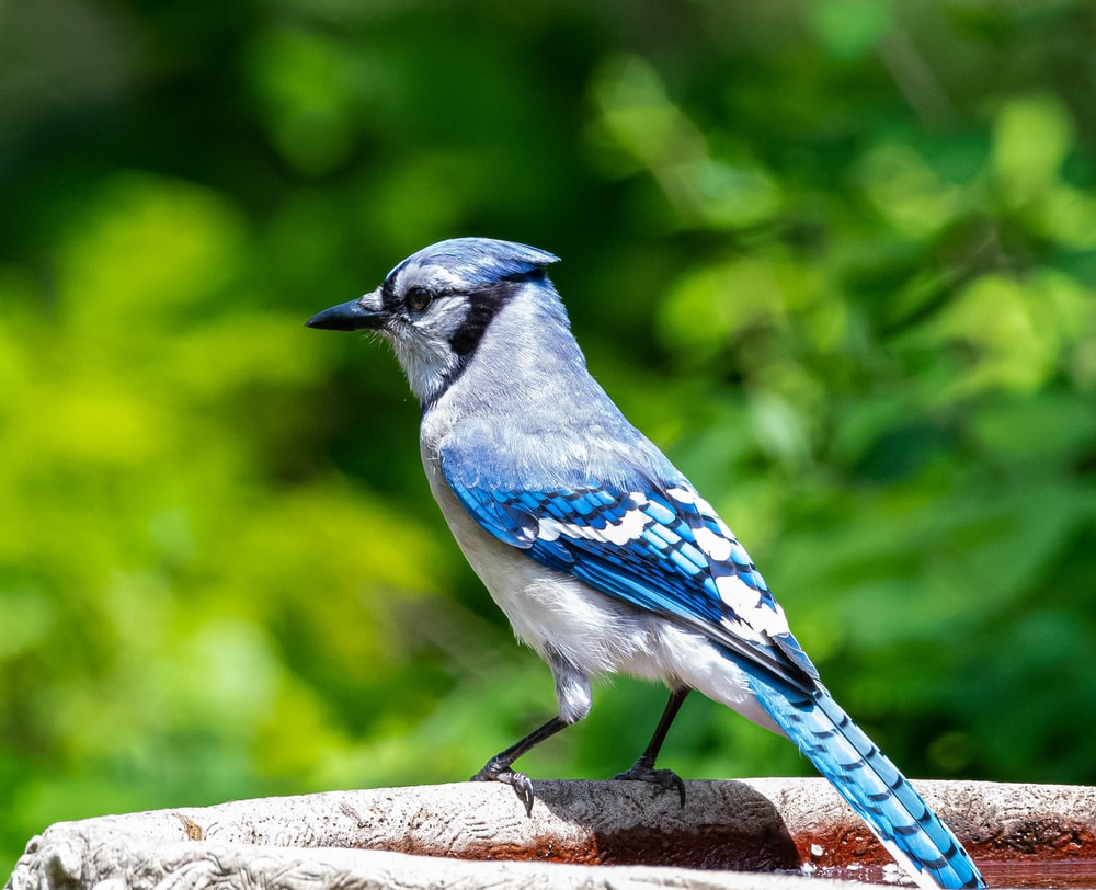 blue and white bird on brown wooden branch