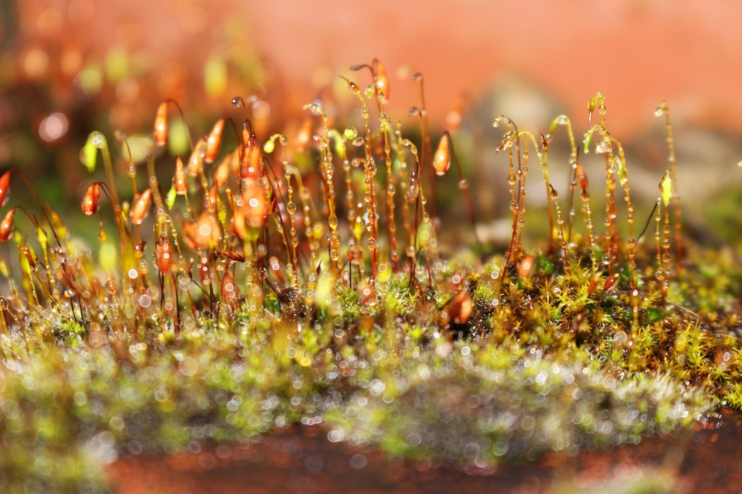 Moss growing on an old brick chimney.