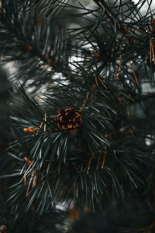 gold and brown christmas ornament on green christmas tree