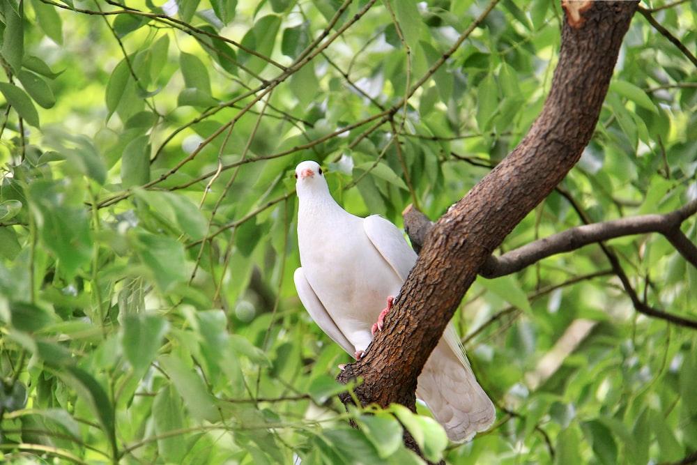 white bird on brown tree branch during daytime