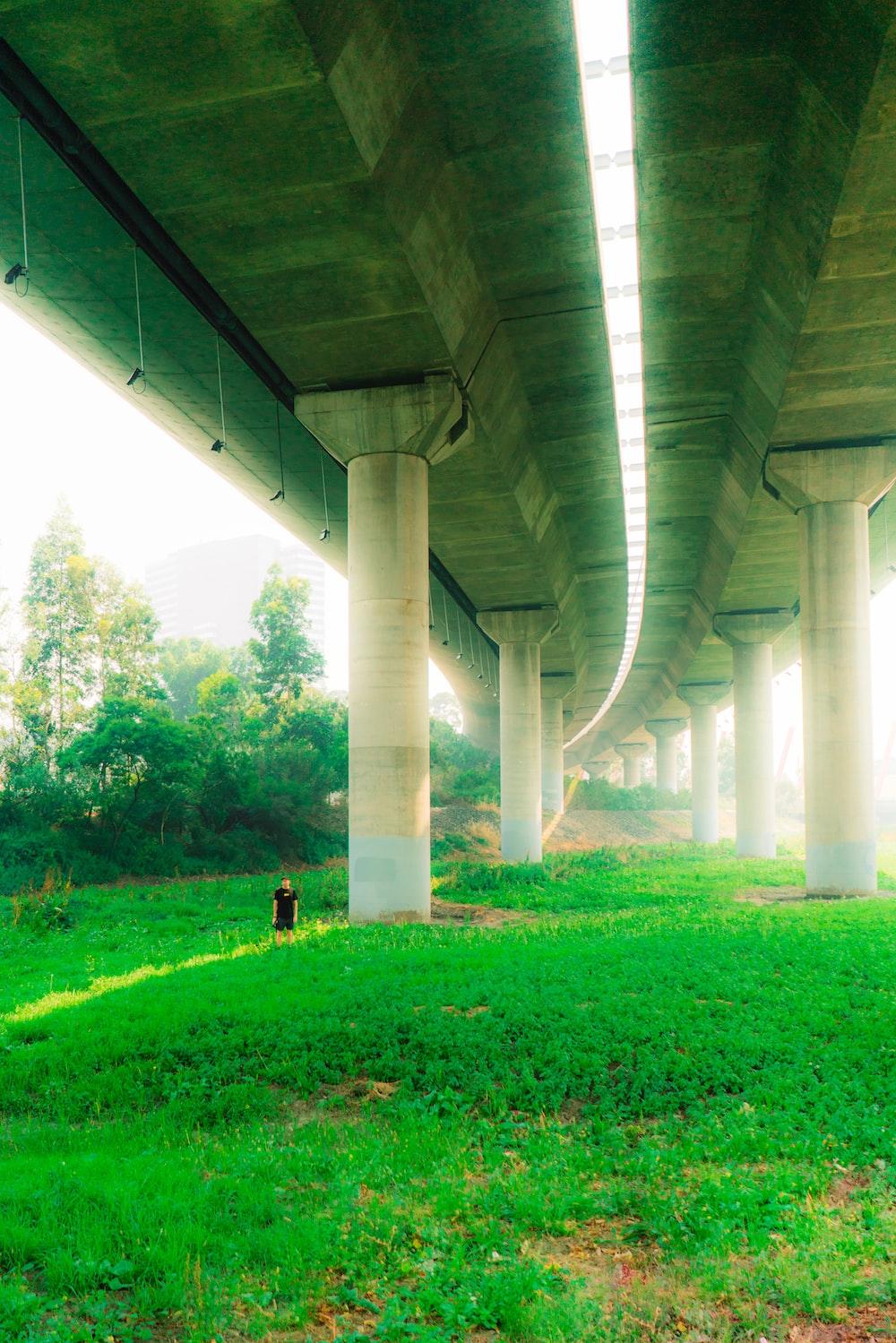 green grass under gray concrete bridge during daytime