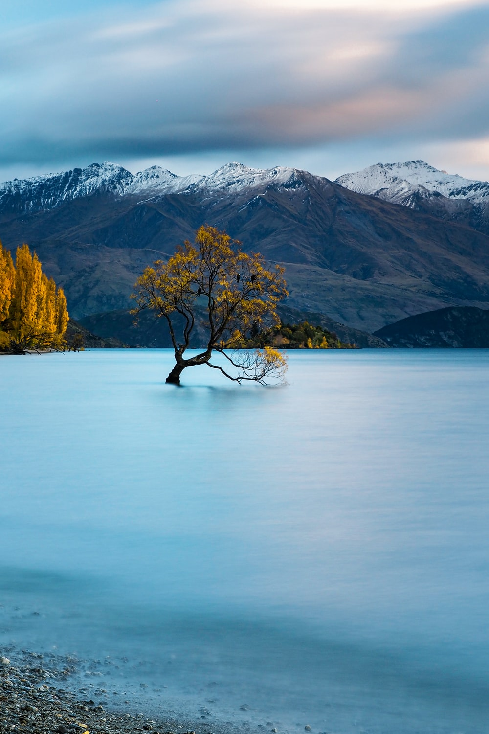 brown tree on body of water near mountain during daytime
