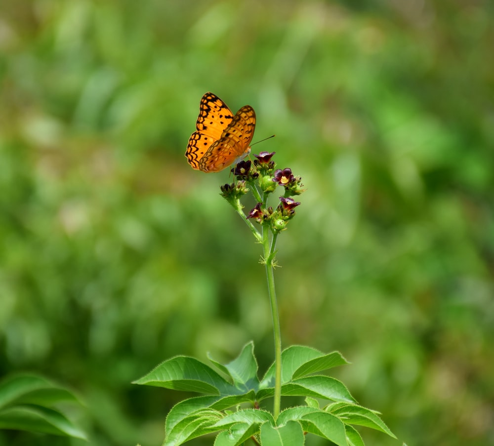 brown butterfly perched on green leaf during daytime