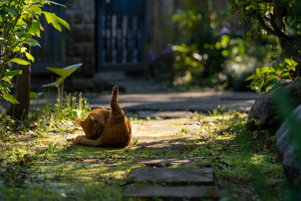brown cat on green grass during daytime