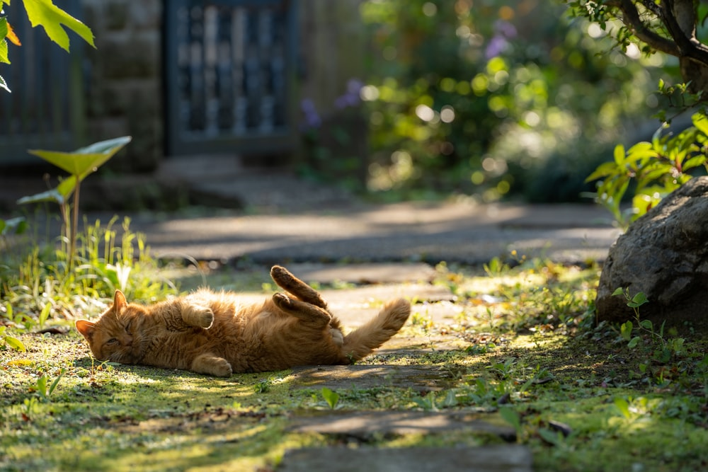 brown short coated dog lying on ground during daytime