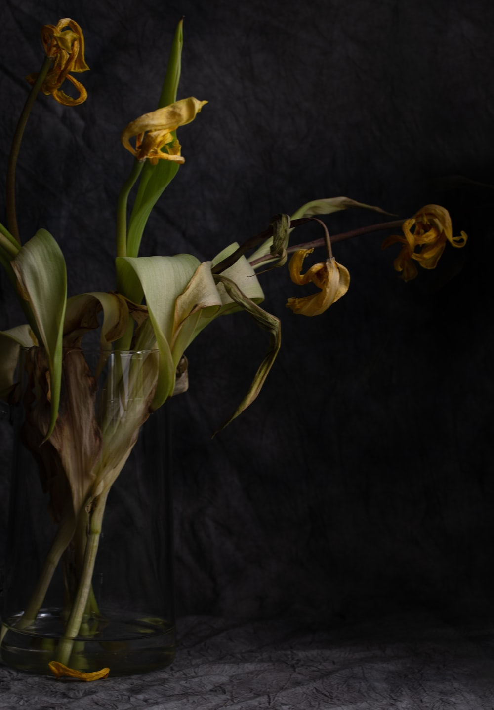 yellow and white flower on black textile