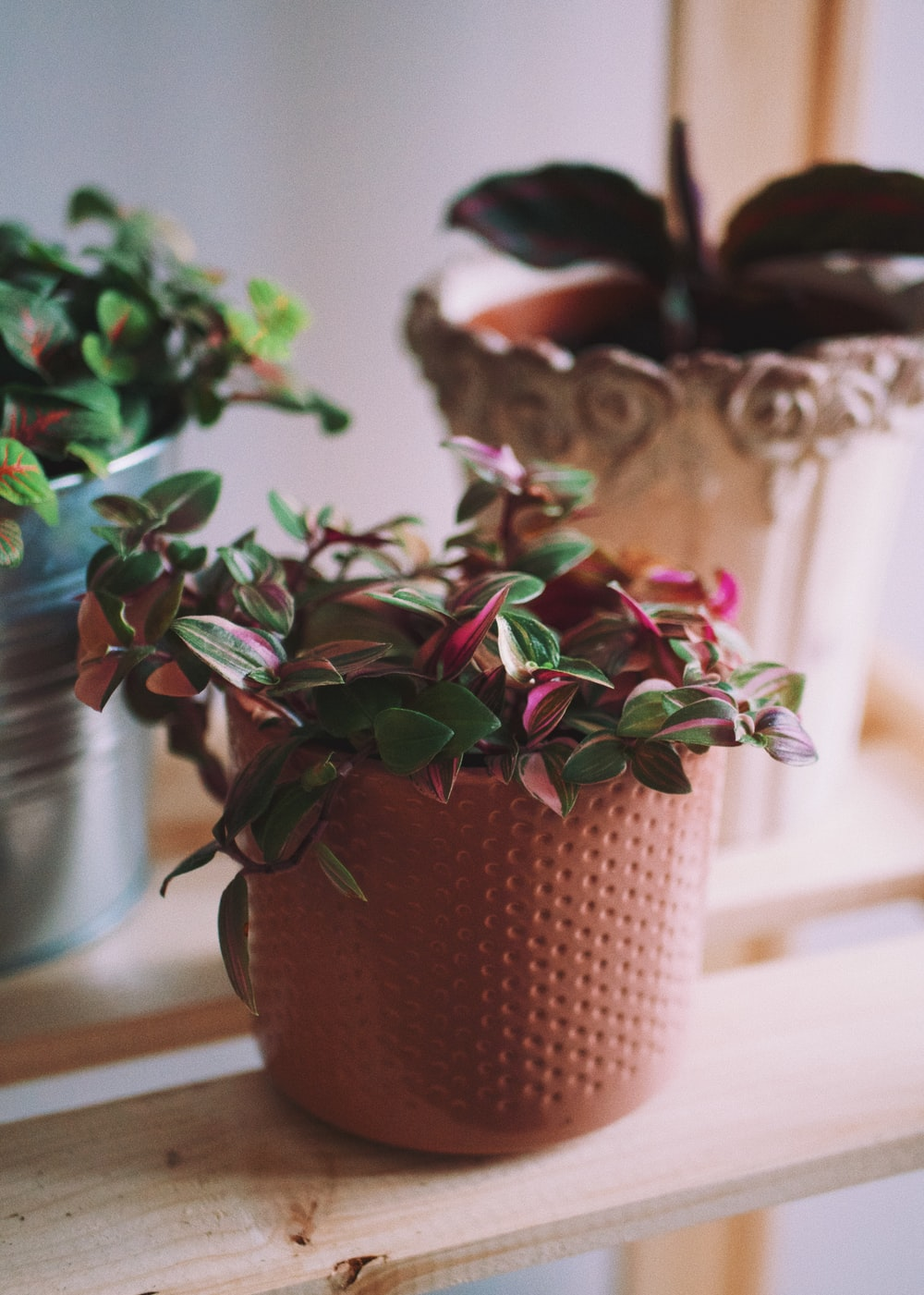 green and red plant on brown clay pot