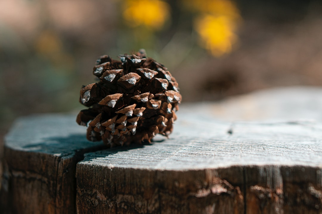 Acorn on a tree stump in the woods