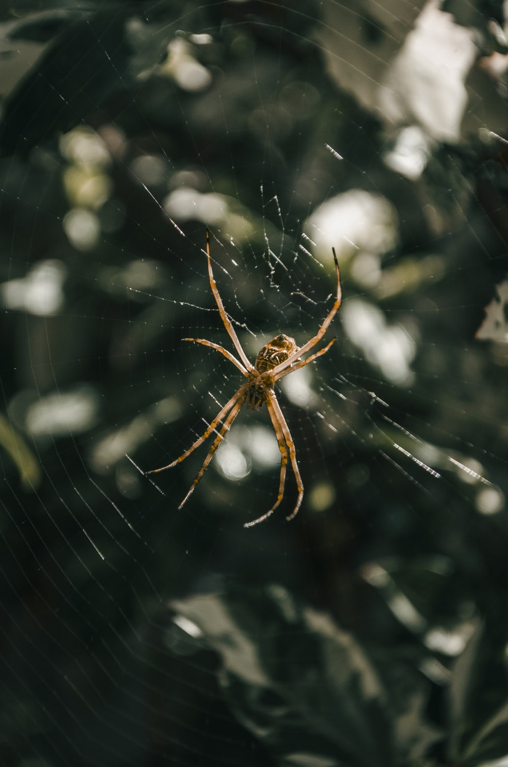 brown spider on web in close up photography