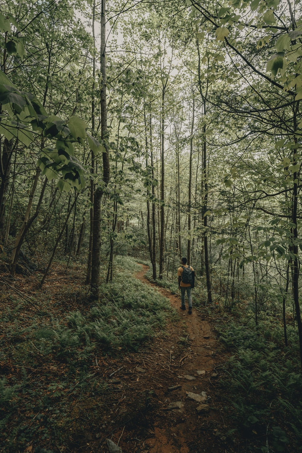 person in red jacket walking on forest during daytime