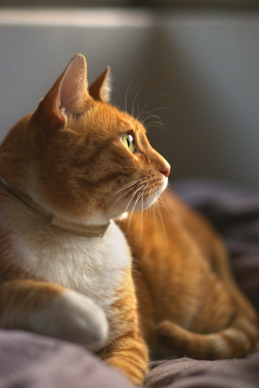 orange tabby cat on black textile