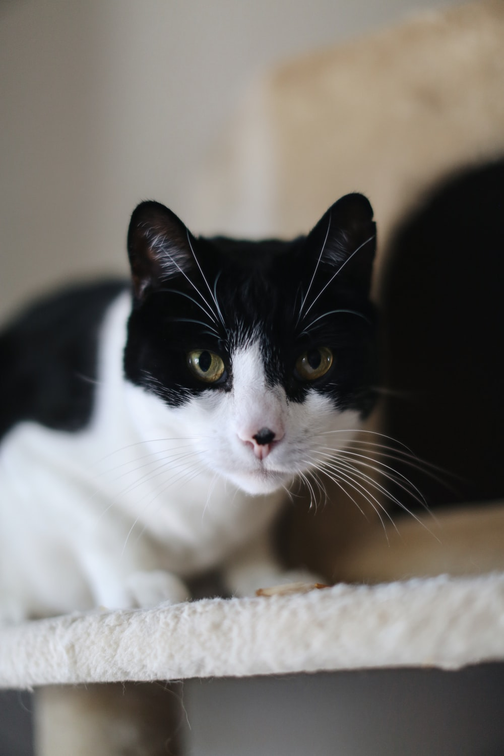 black and white cat lying on brown textile