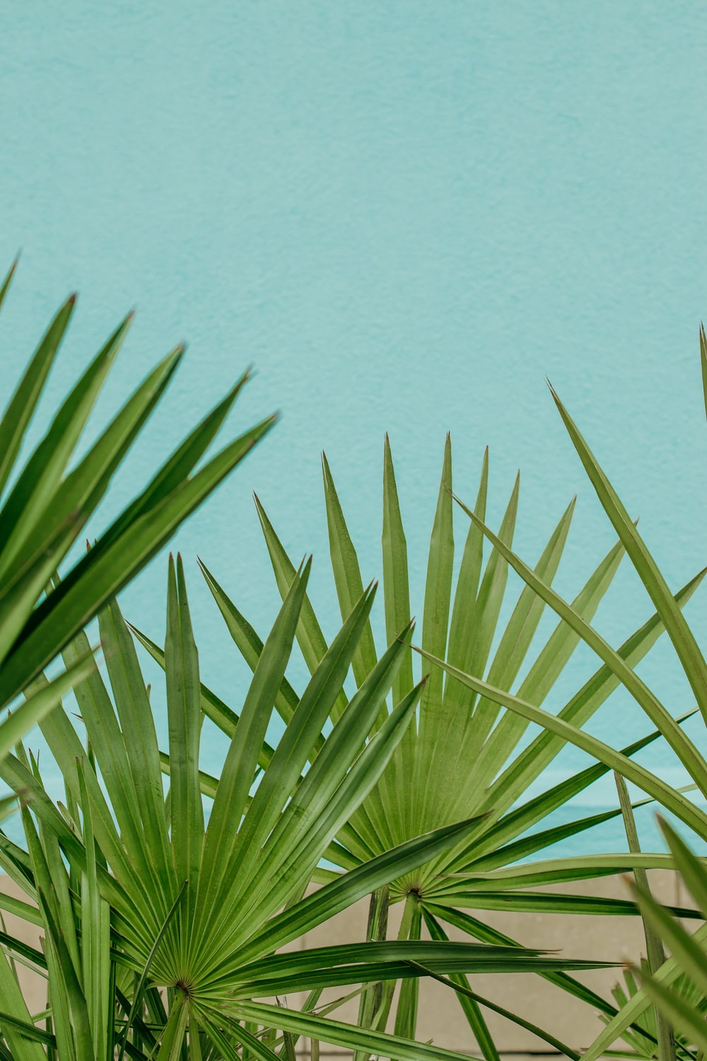 green palm plant near body of water