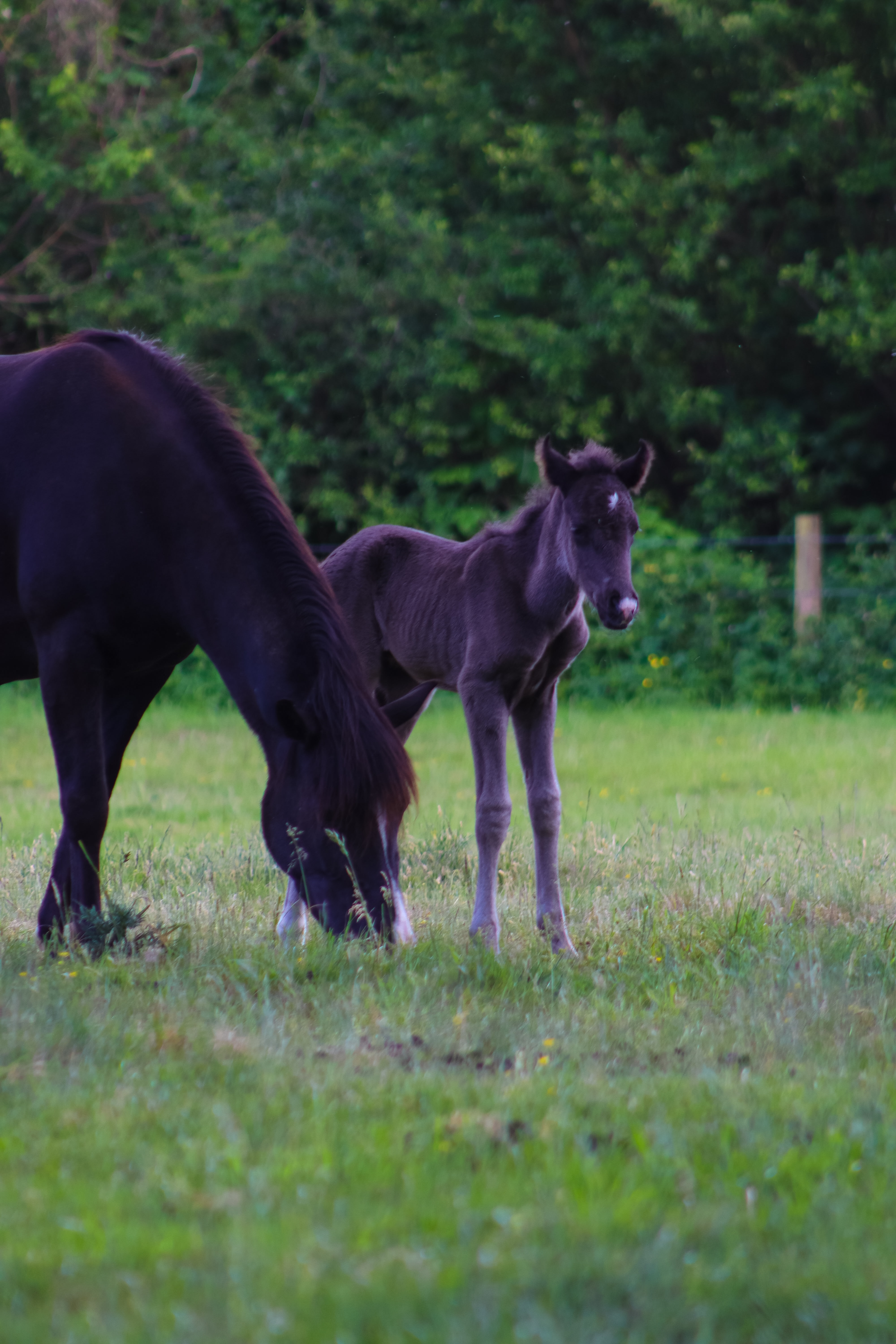 Baby Horse Pictures Download Free Images On Unsplash