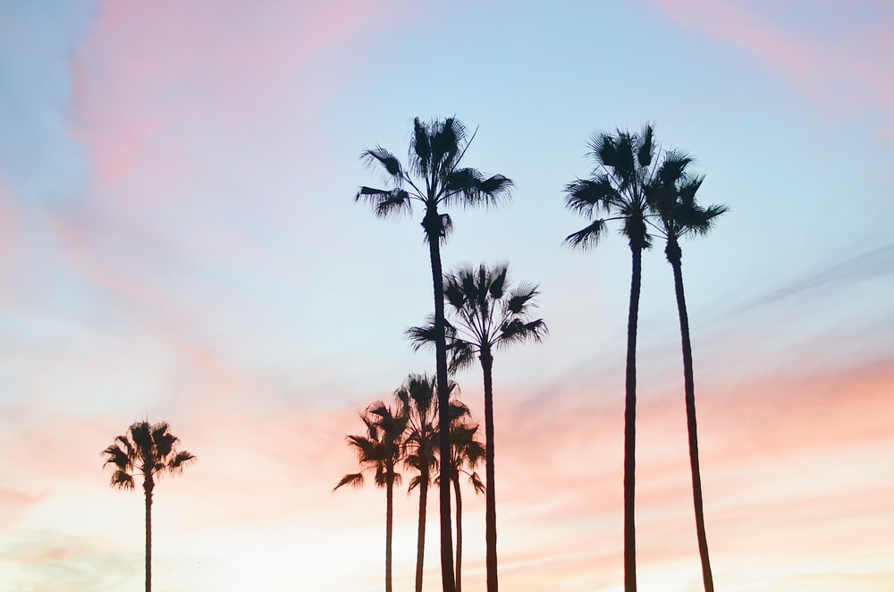 palm trees under blue sky during daytime