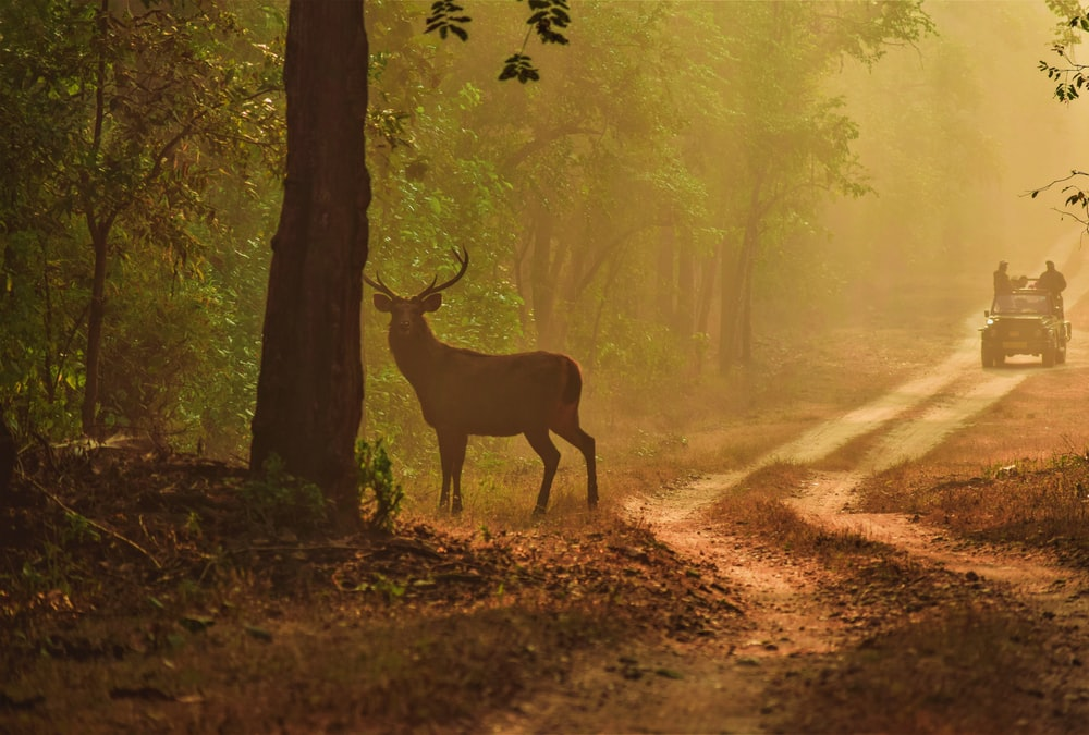 brown deer standing on forest during daytime