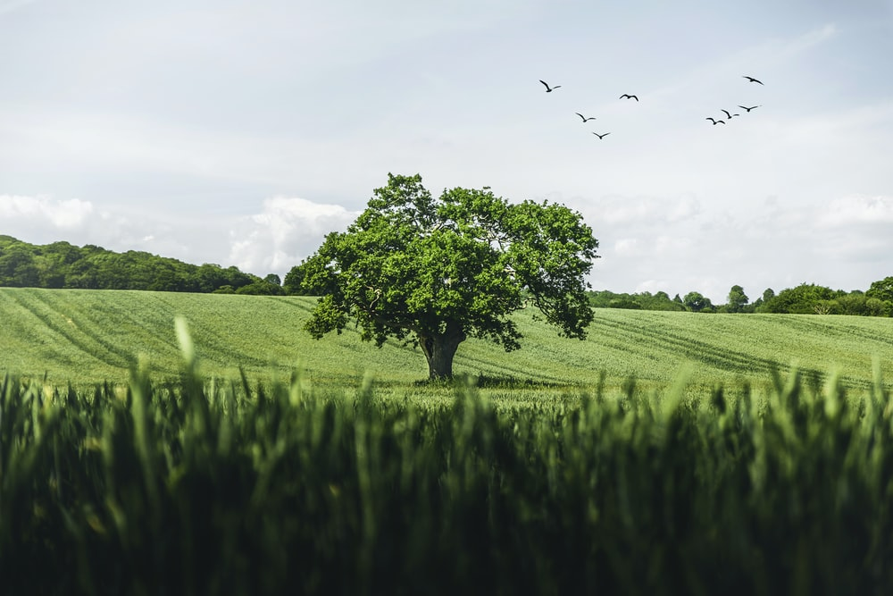 green grass field with birds flying during daytime