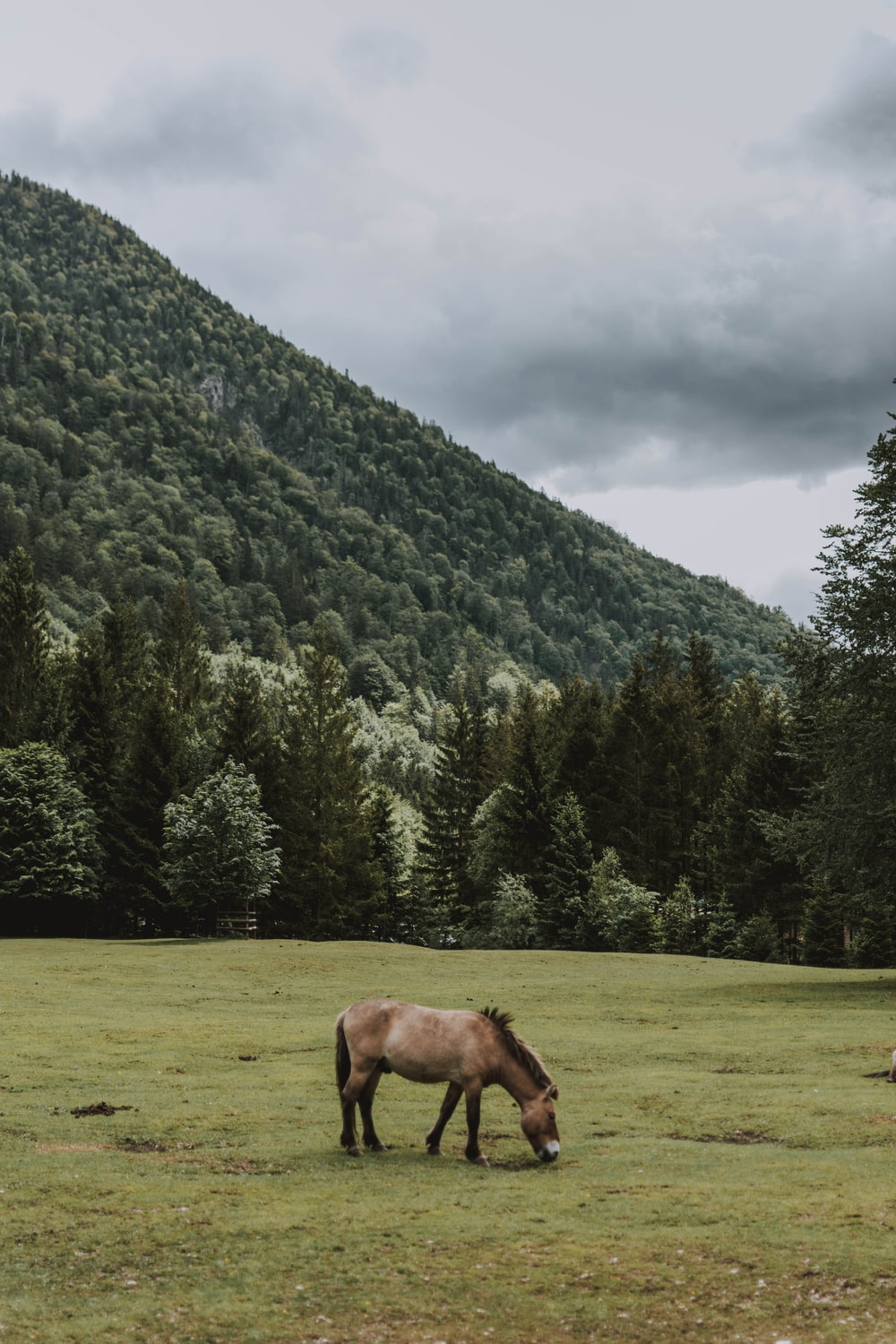 brown horse eating grass near green trees and mountain during daytime