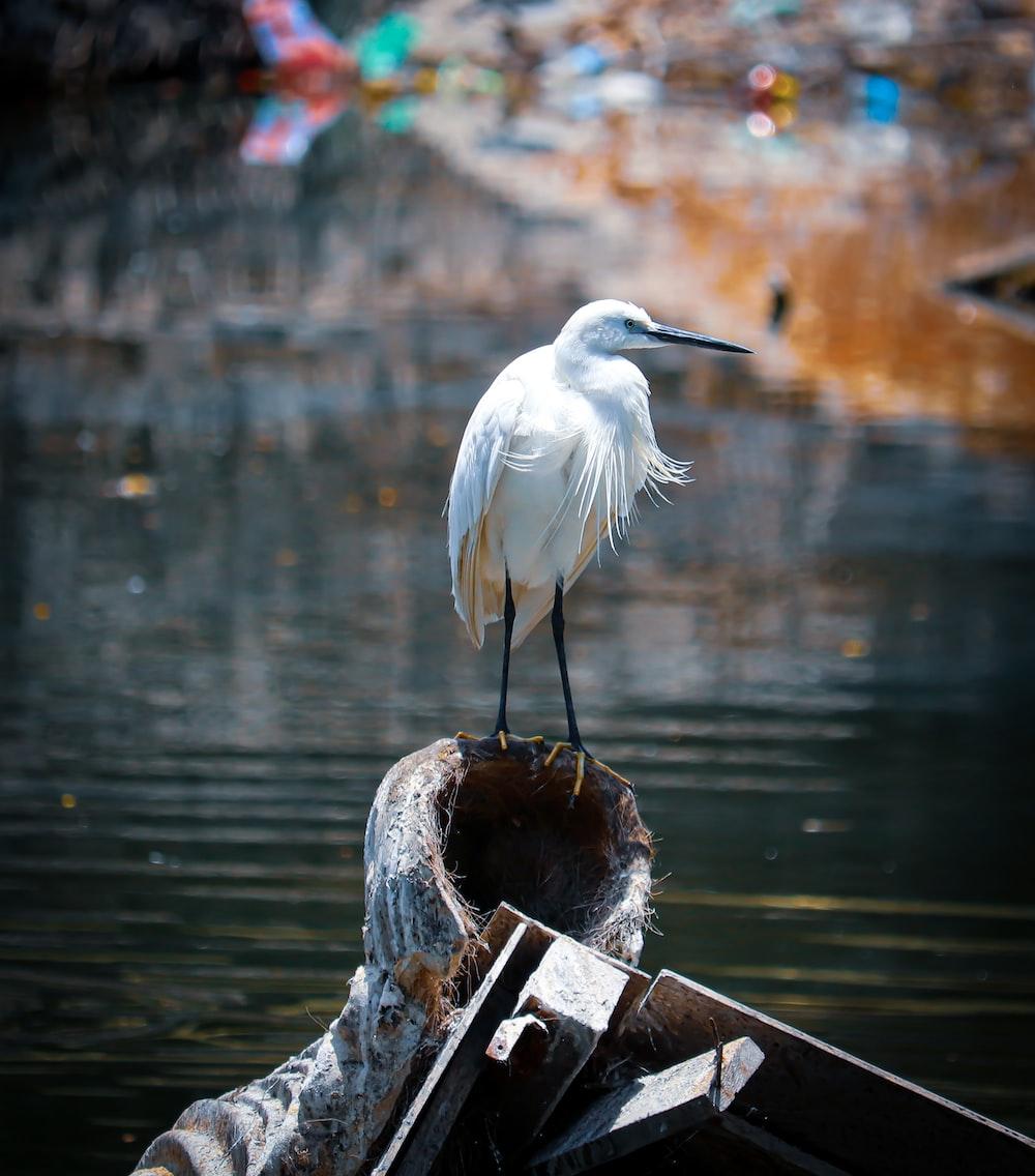 white bird on brown wooden post