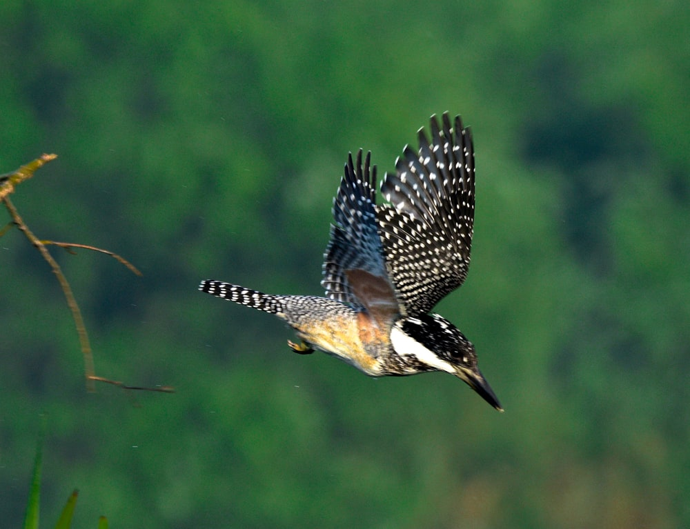 blue and brown bird flying