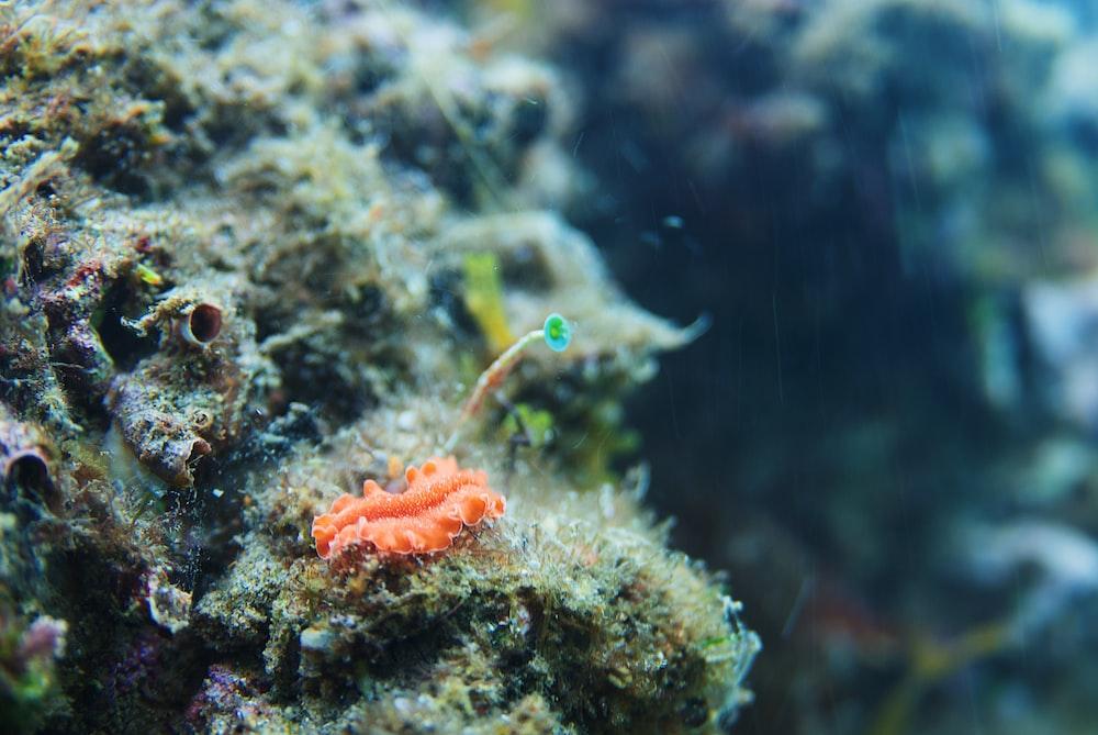 orange and green sea creature