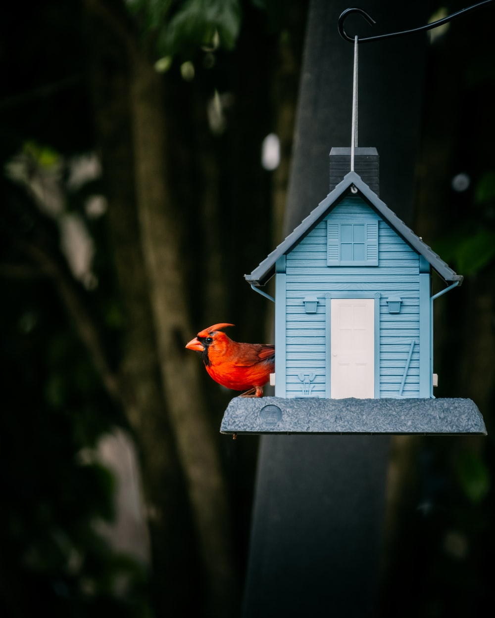 red bird on blue and white wooden bird house