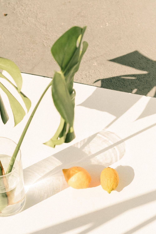 orange fruit on white textile