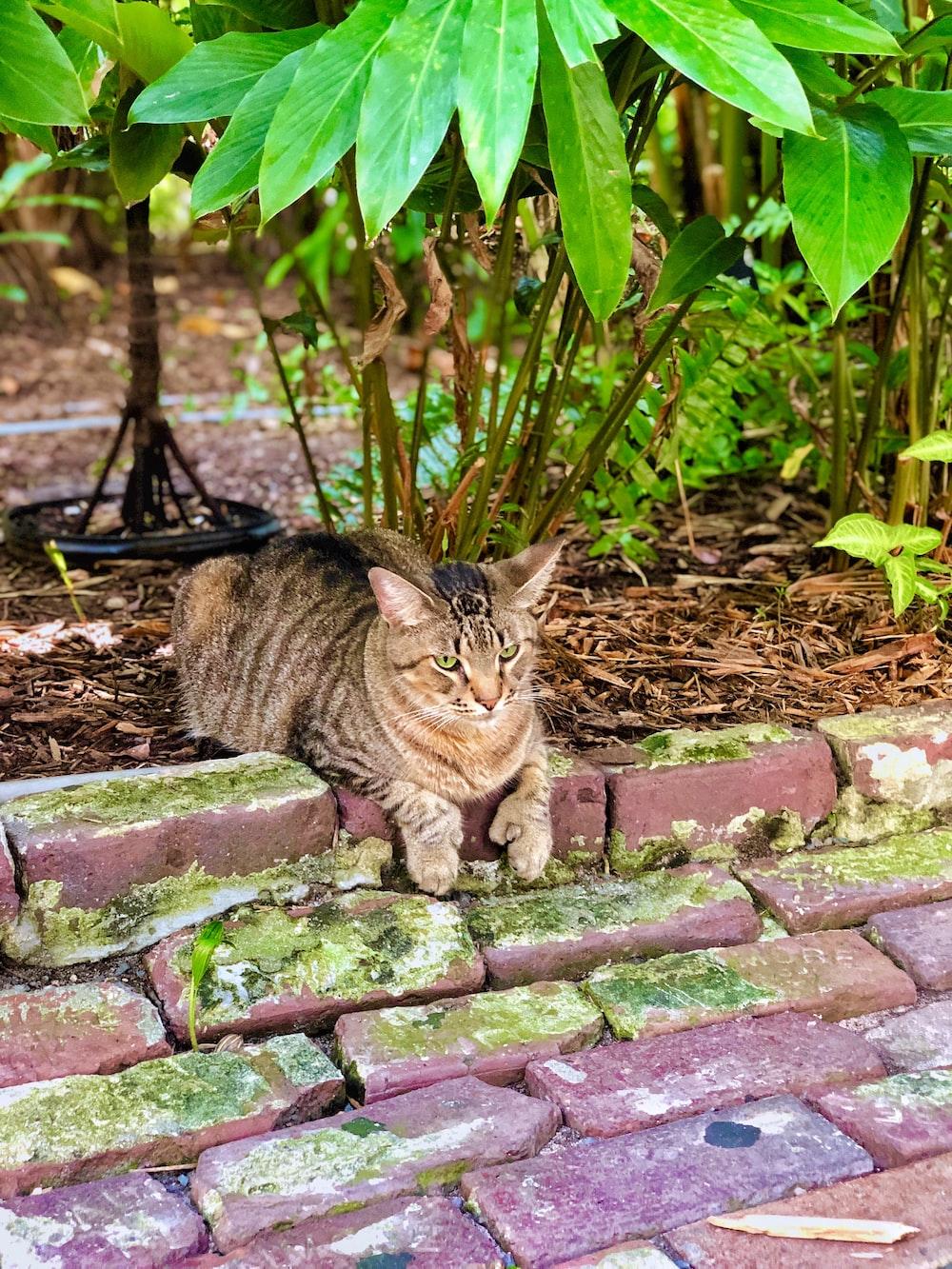 brown tabby cat on brown brick wall