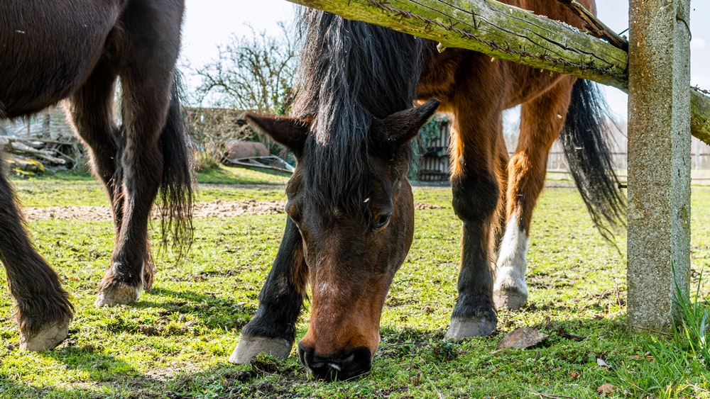 brown and black horse eating grass during daytime