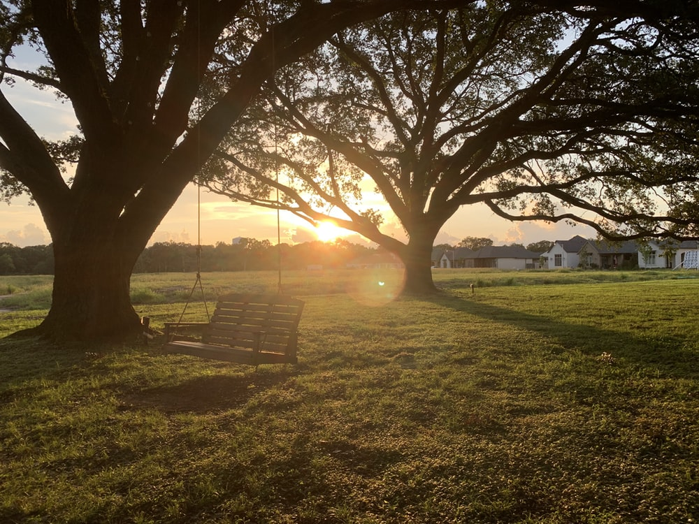 brown wooden bench on green grass field during sunset