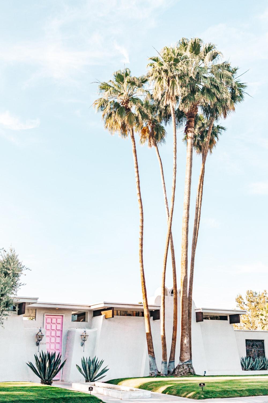 palm tree near white house