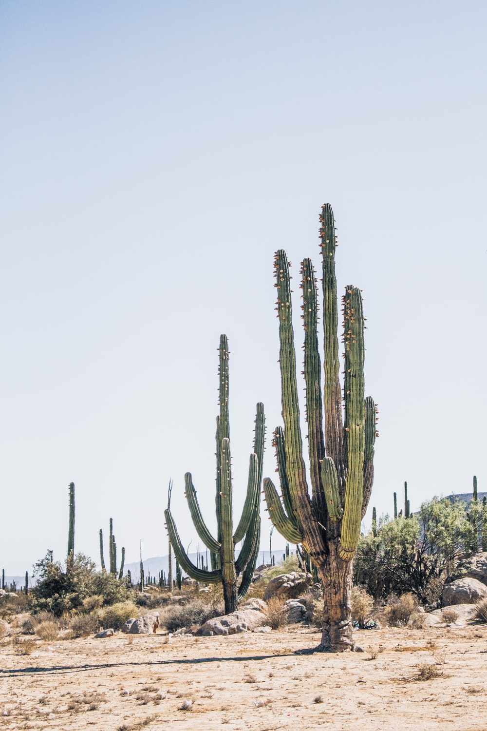 cactus plants on field during daytime