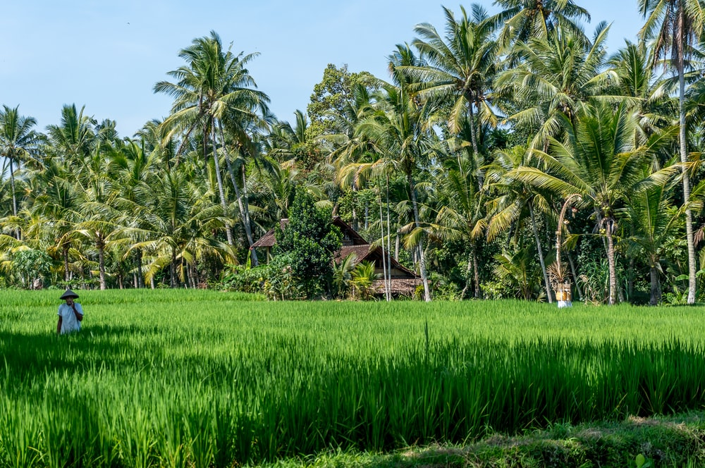green grass field near palm trees under blue sky during daytime