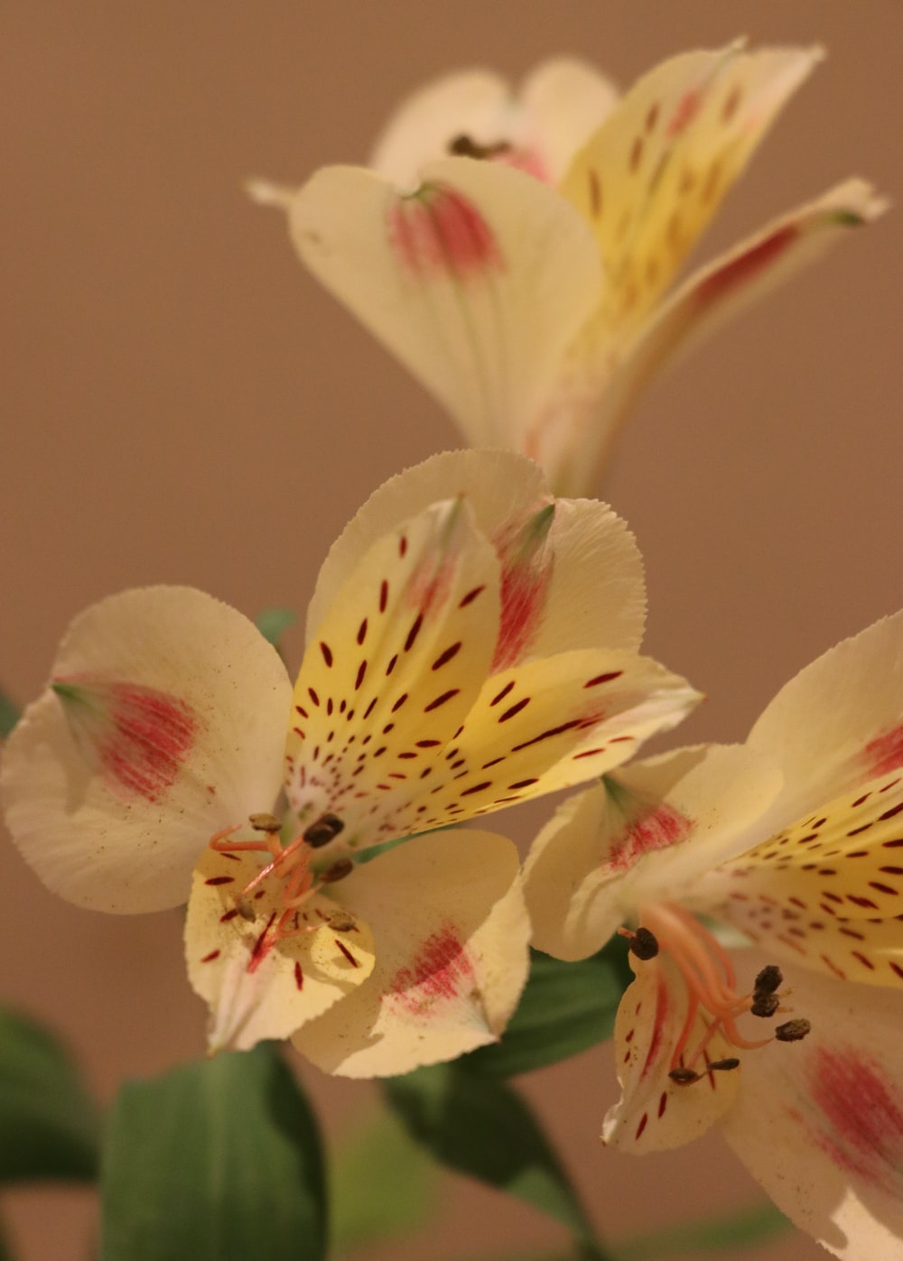 white and yellow flower in close up photography