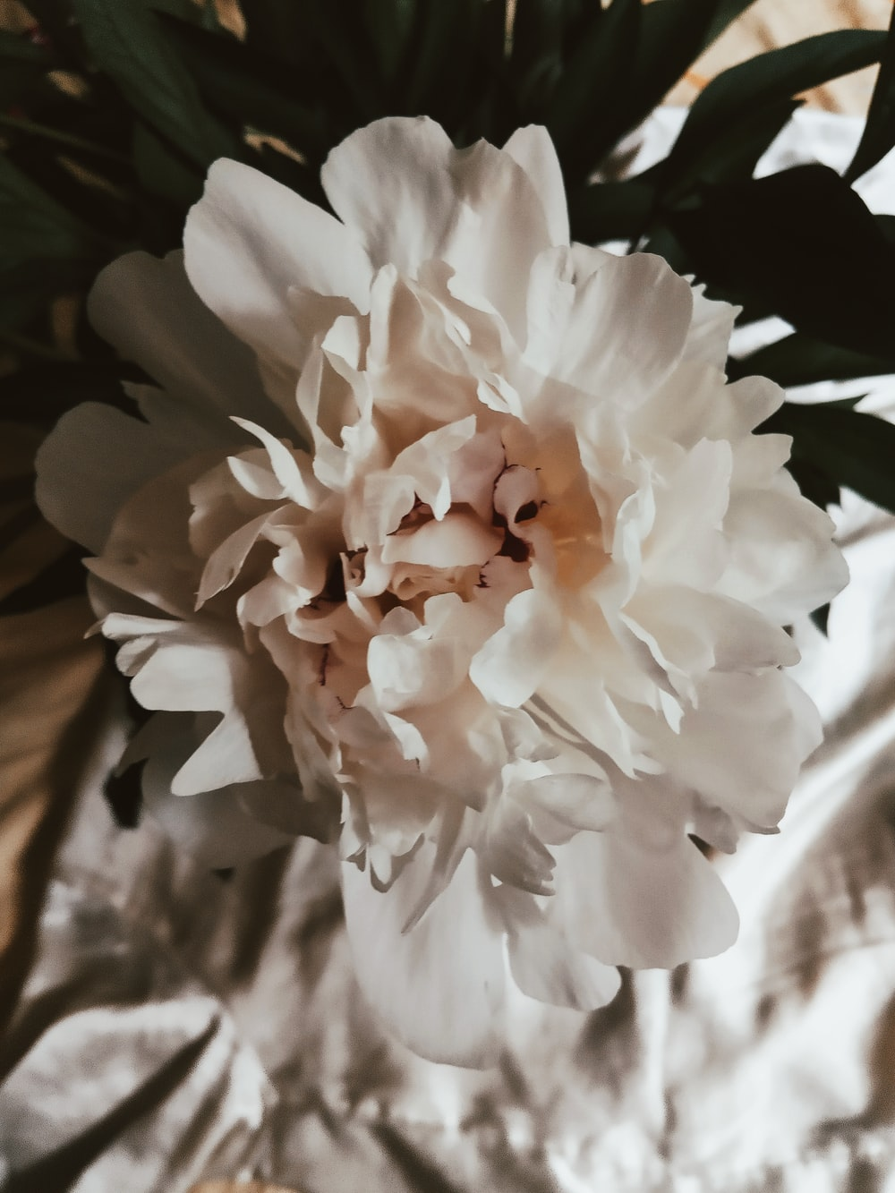 white and orange flower in close up photography