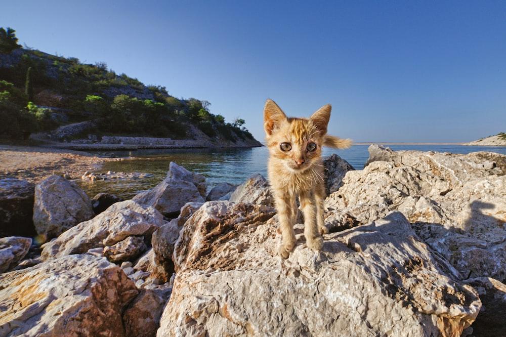 orange tabby cat on rocky shore during daytime