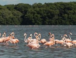 Tarangire NP - Lake Manyara NP