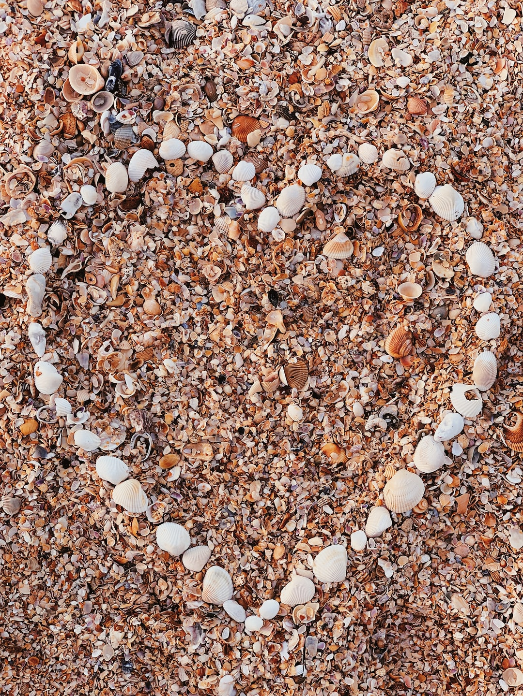 Heart beach shells seashells patterns textures beachlife beach love