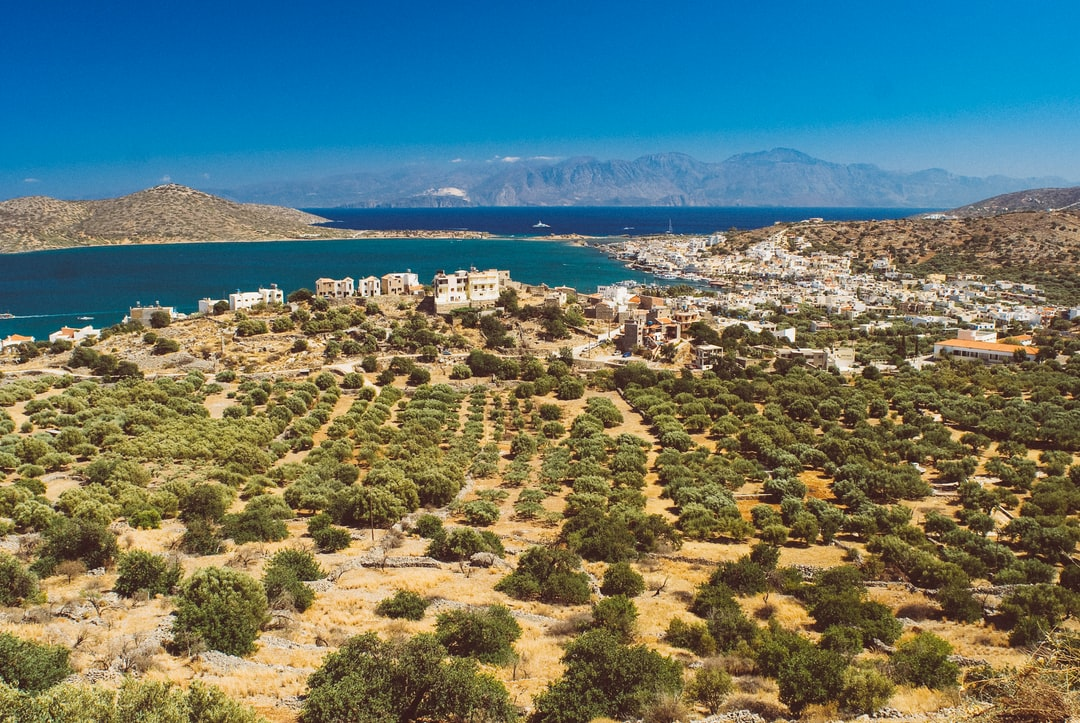 Landscape with olive groves and the sea.