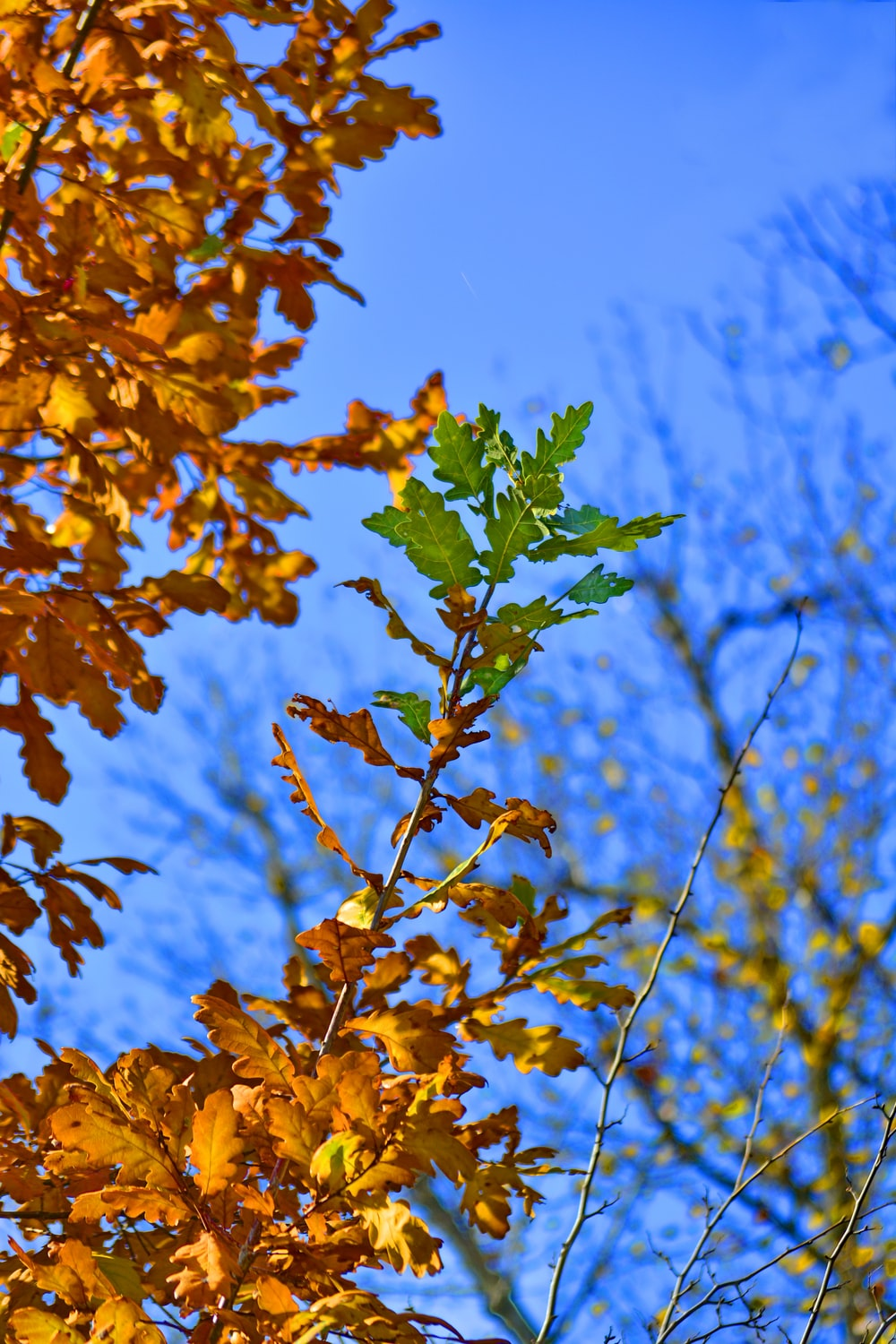 yellow and green maple leaves
