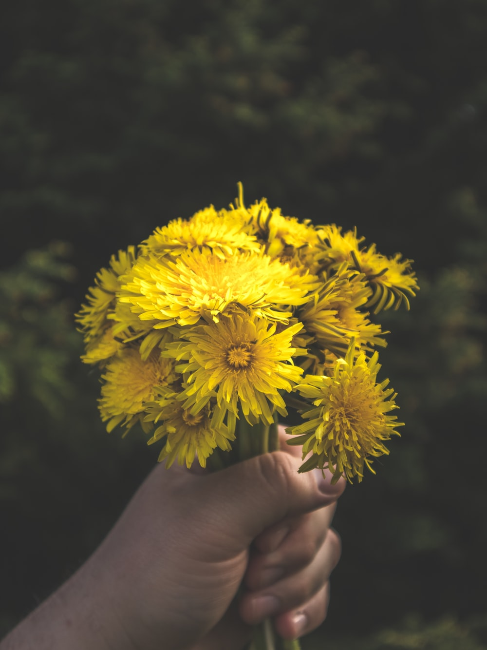 yellow flower on persons hand
