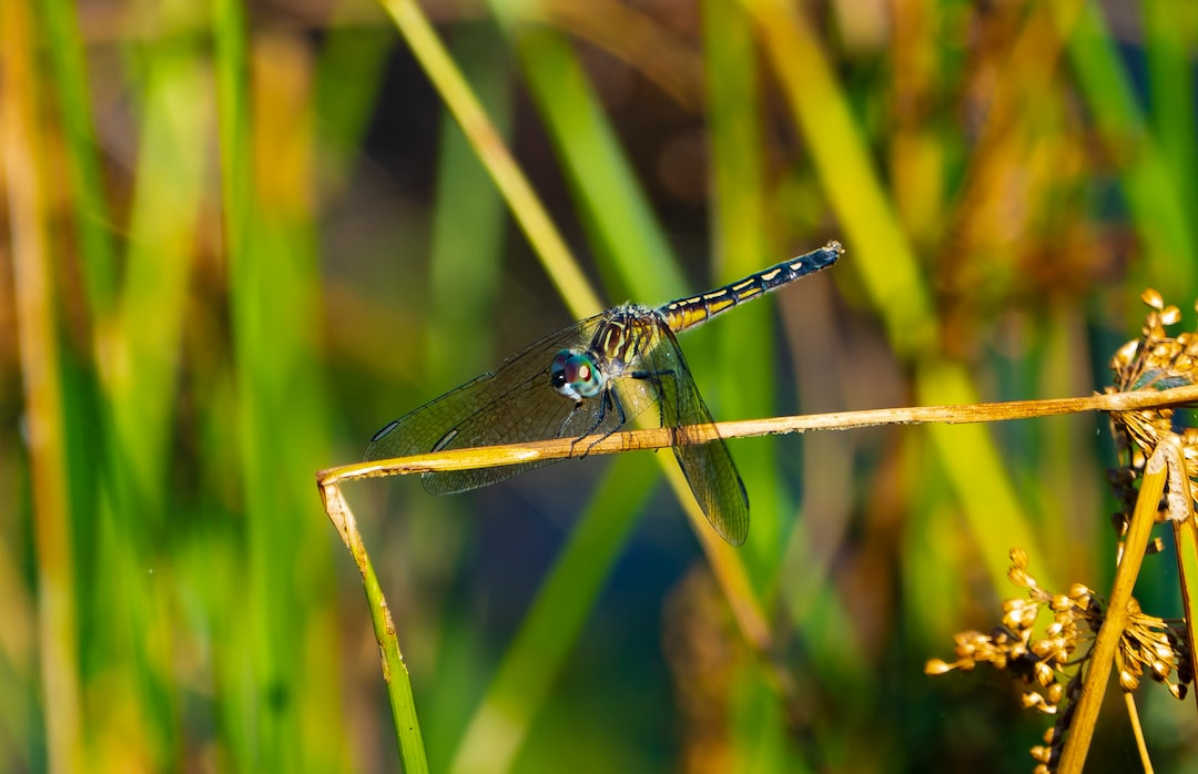 Dragonfly perched on a plant stem
