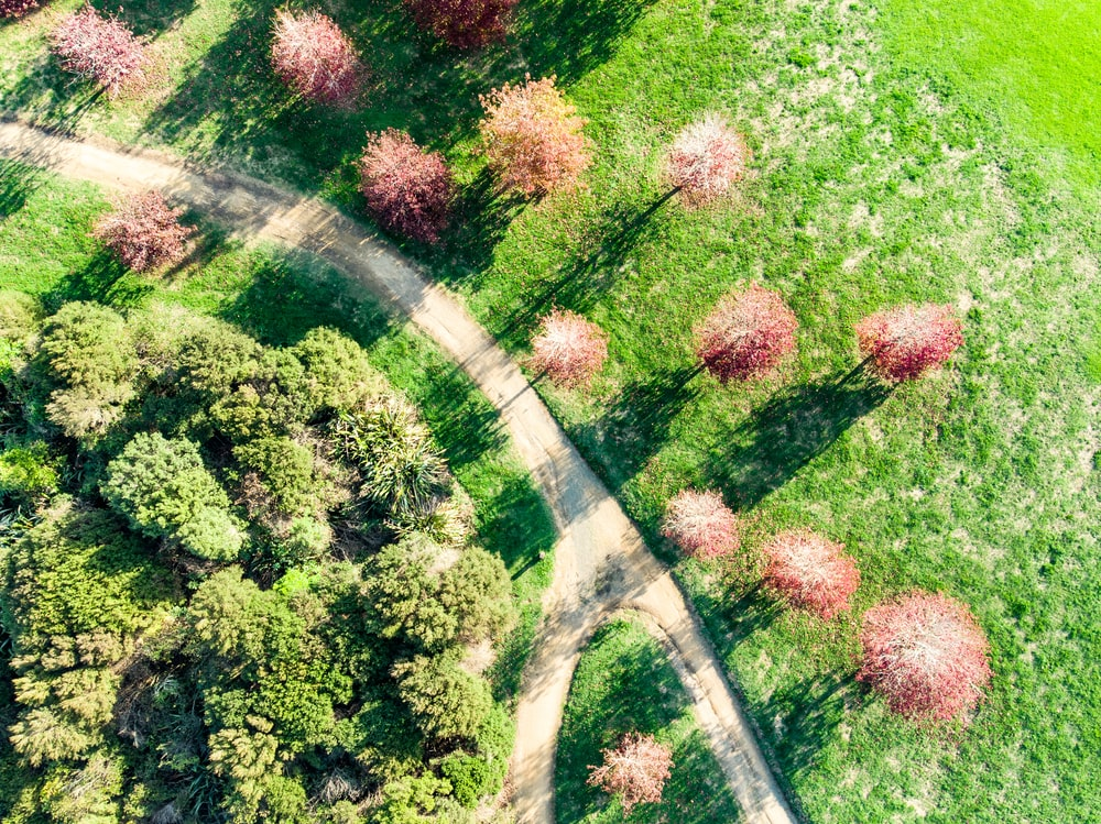 aerial view of green and purple trees and plants