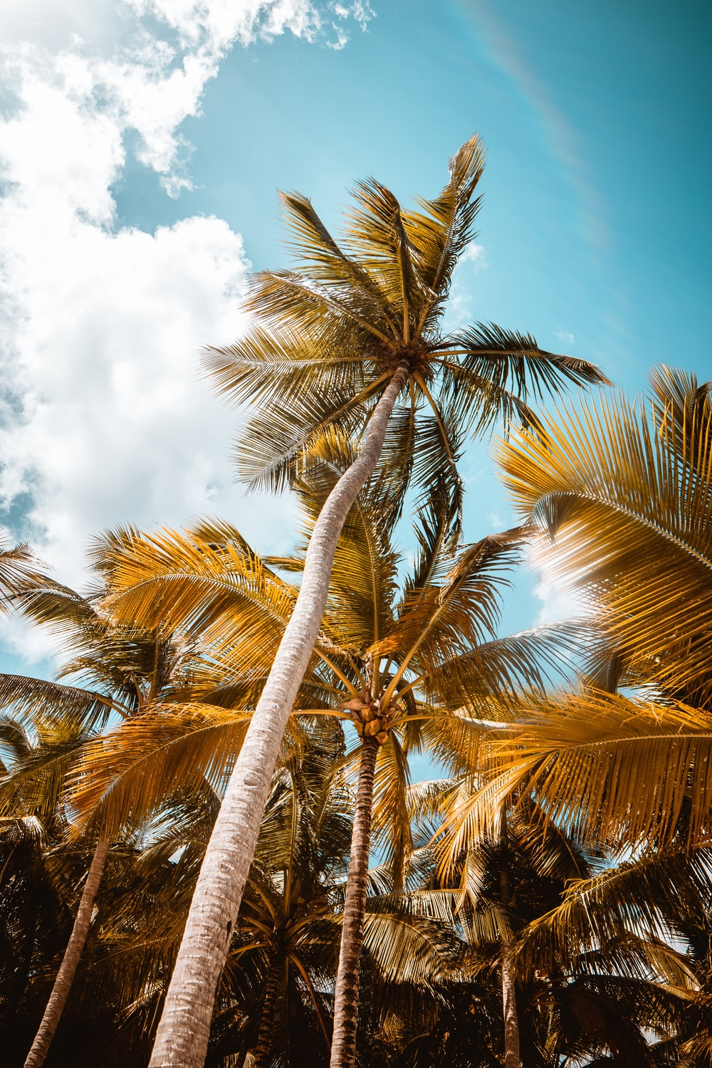 coconut tree under blue sky during daytime