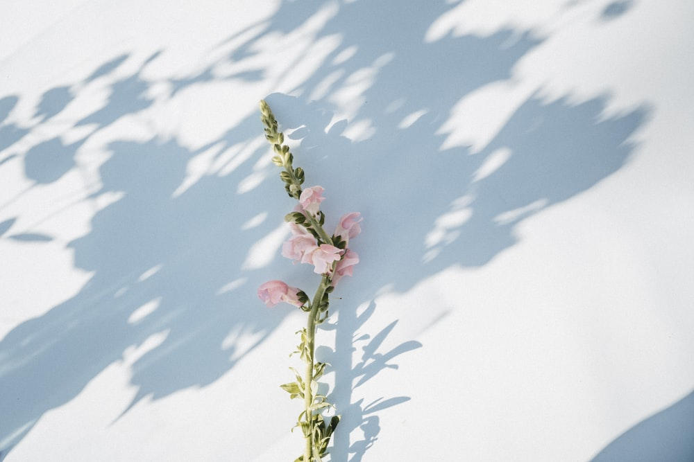 pink and white flower under blue sky during daytime